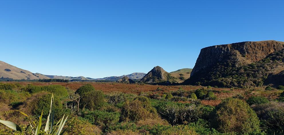 Okia Reserve with successful revegetation in foreground and Pyramids in the distance. PHOTO:...