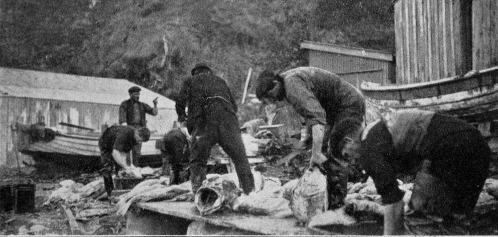 The fishing industry at The Nuggets, South Otago. — Otago Witness, 12.10.1920. ...