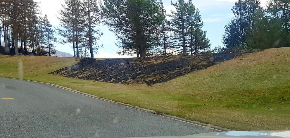 Patches of grass scorched in the Lake Ohau fire three weeks ago (above) and rejuvenating, in the...