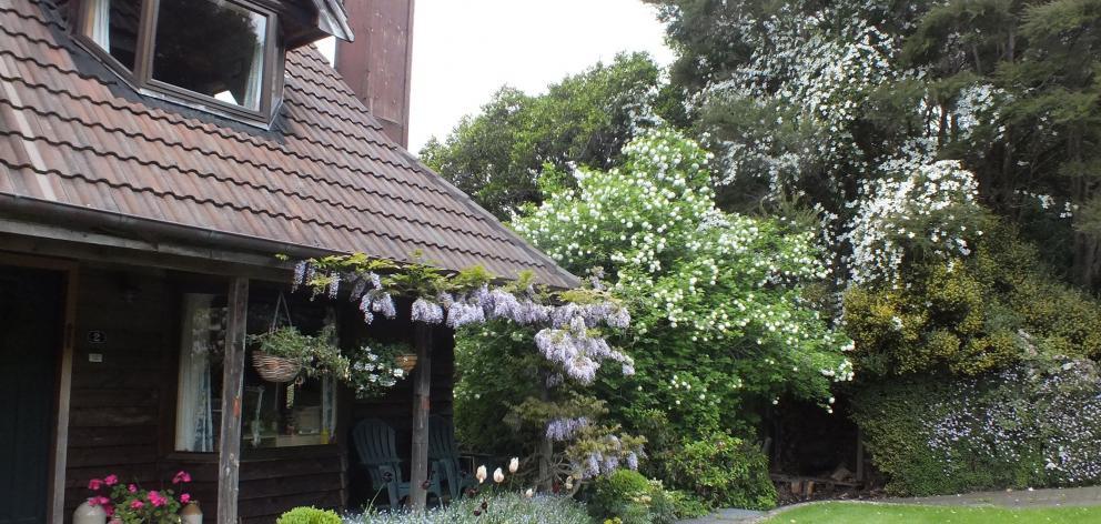 Wisteria drapes the veranda in early November.