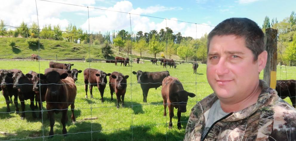 Hamish Hutton with some of his steers.  PHOTO: PHILIP CHANDLER