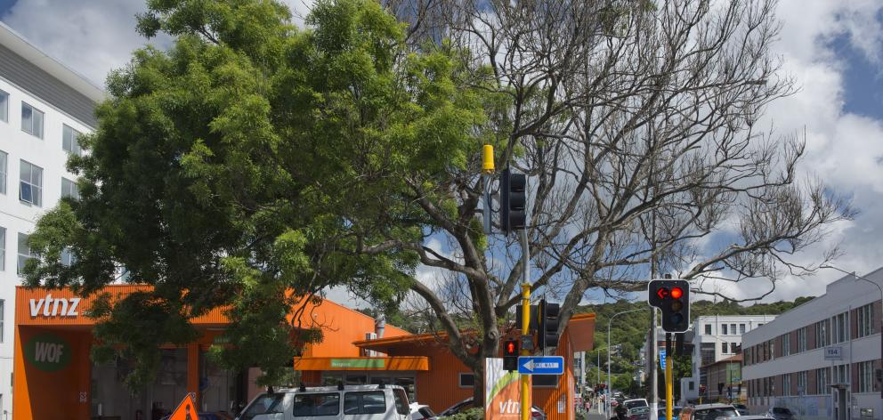 An ailing ash tree at the corner of Hanover and Castle Sts in Dunedin is listed as significant....