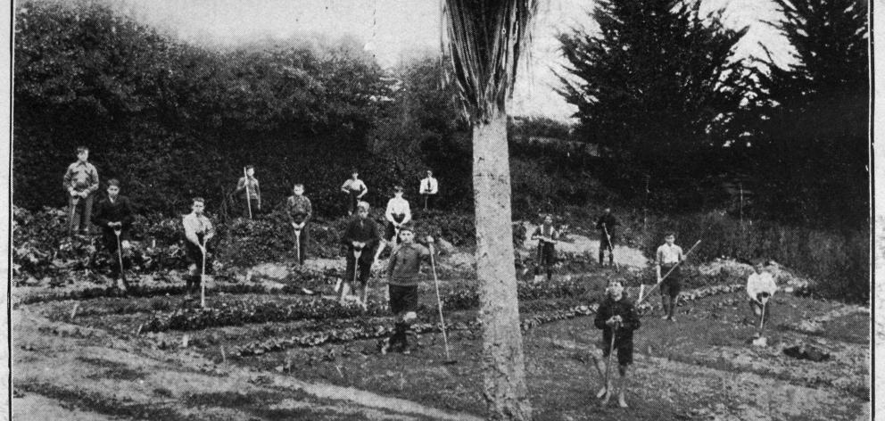 The public school garden at Hampden, with the pupils at work. — Otago Witness, ...