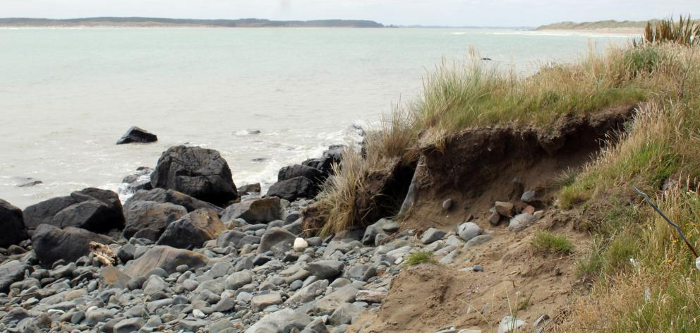 Along from Omaui Beach where the human skull was found protruding from the exposed earth  bank....