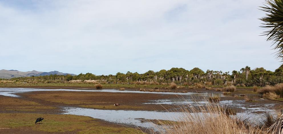 Despite being surrounded by suburbs New Brighton's Oruapaeroa/Travis Wetland Nature Heritage Park...