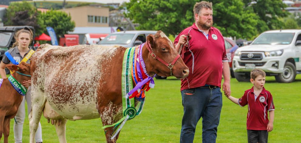 Milking Shorthorn breeder Logan Kelly's son Watson (5) proudly walks with his dad and Burness EMP...