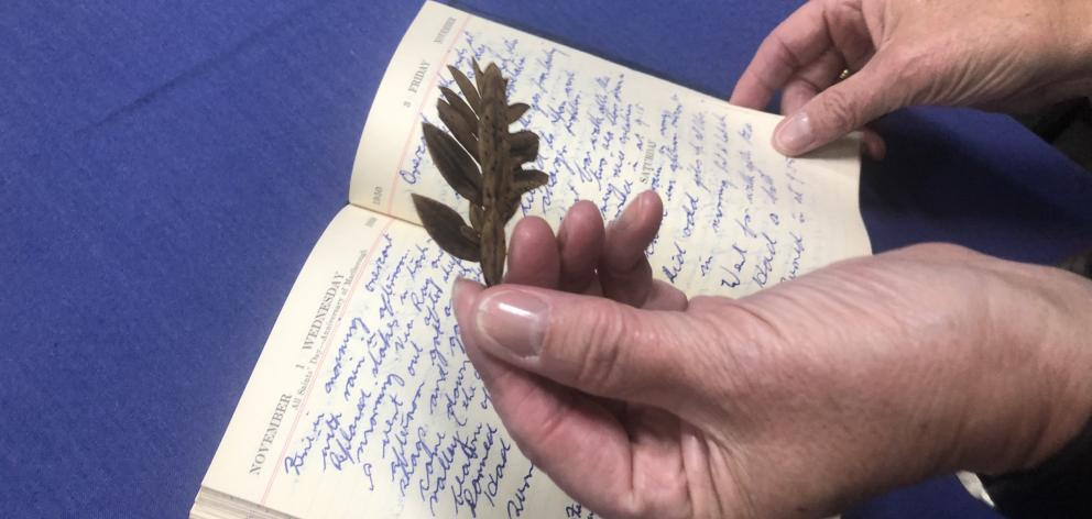 A leaf from ''the loneliest tree in the world'' found in Robert Stanley's diary of his time on Campbell Island. PHOTO:KERRIE WATERWORTH