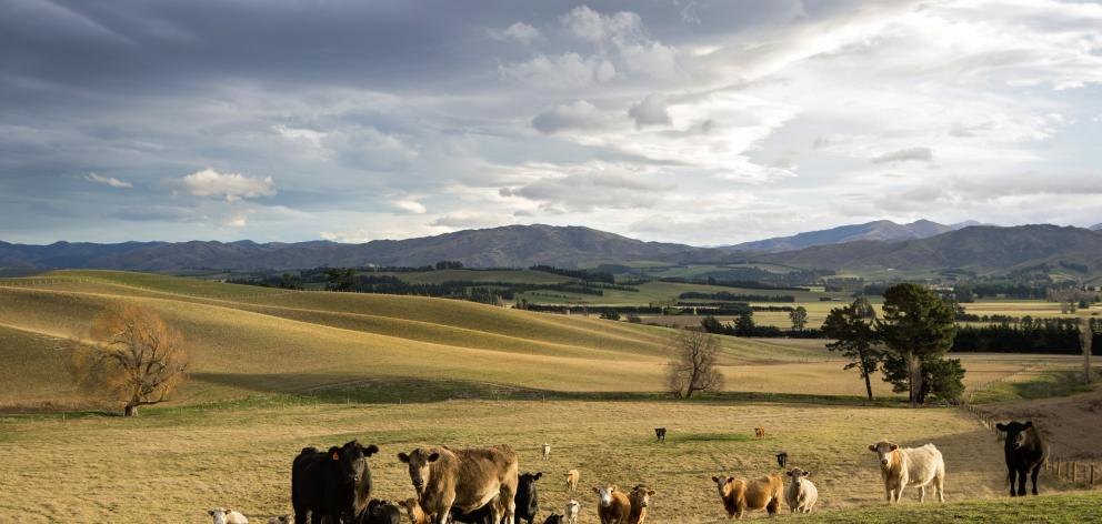 An irrigation proposal is in tatters for land in the Hawarden and Waikari areas. Photo: File