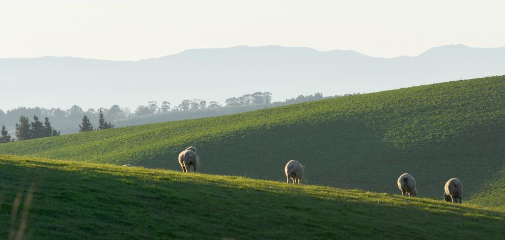 Freshwater rules that mean consents will be needed for  intensive winter grazing on any farmland...