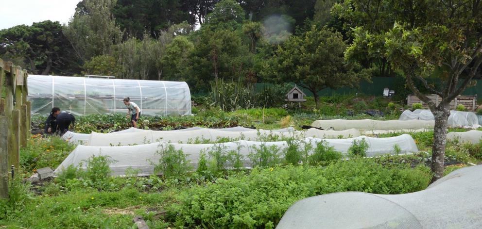 Kaicycle, a productive urban farm in Wellington.PHOTOS: CHARMIAN SMITH