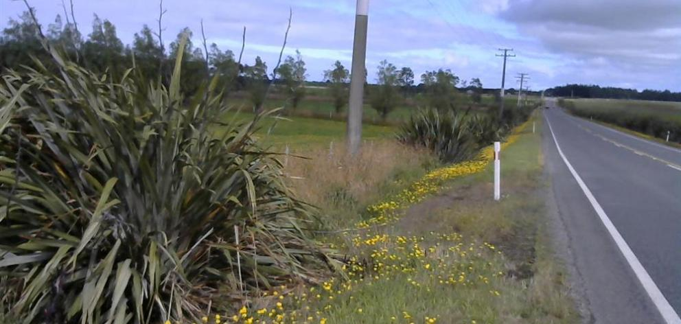 SH98 east of Lorneville. Photo: NZTA