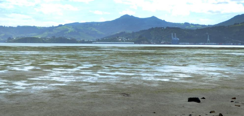 The mudflats of Harwood. Photo: ODT files
