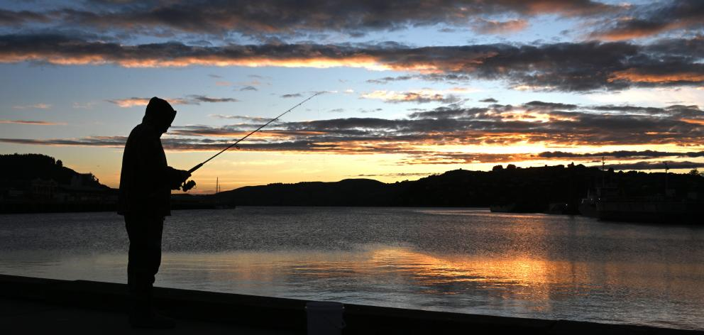 Bathed in early morning light yesterday, a fisherman takes part in the Otago Salmon Anglers'...