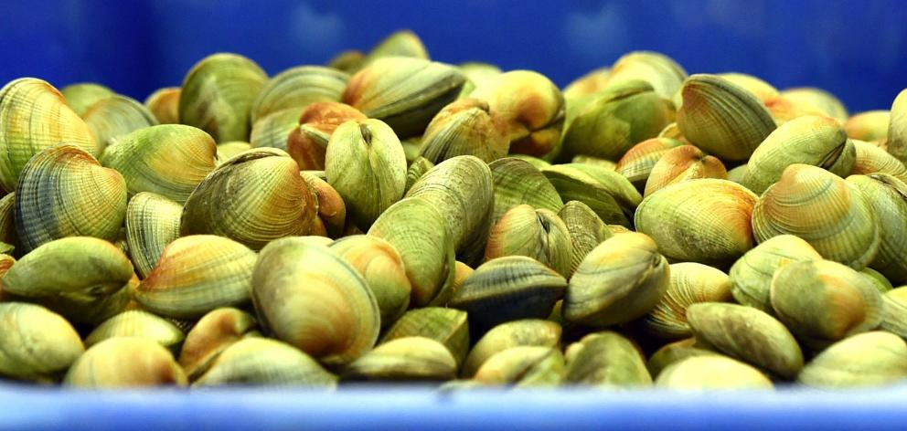 The next step for Southern Clams, which exports clams to the United States, Europe and Asia, is...