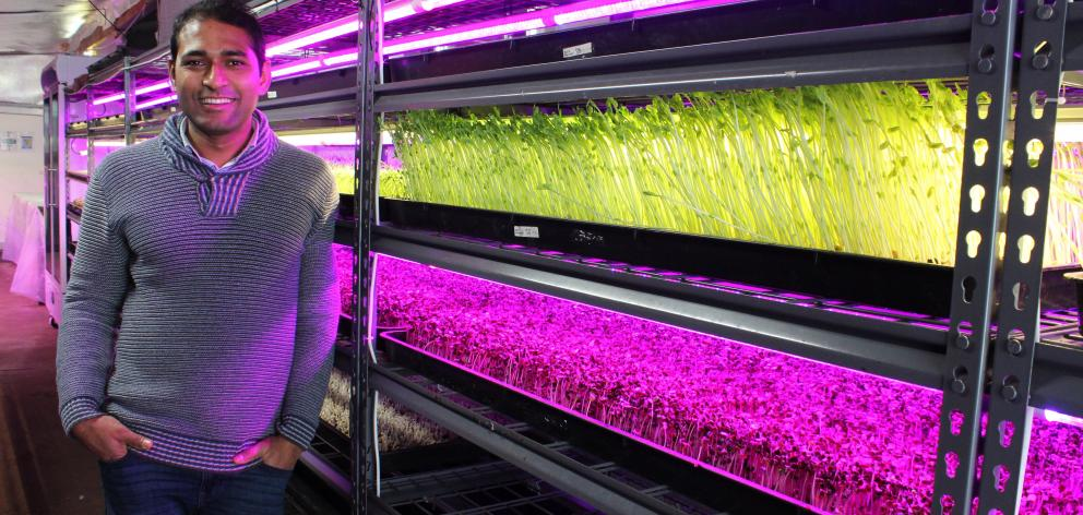 Crunchy managing director Benji Biswas at his microgreen growing business in Invercargill. Photo: Supplied