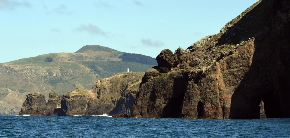 The rugged headland at Cape Saunders on the Otago Peninsula. Photo: Stephen Jaquiery/file