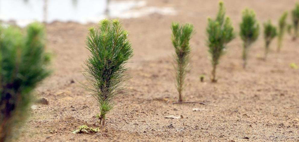 Concerns have been raised about the impact forestry conversions are having on what are...