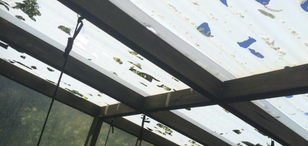 Heavy hail punched through the ceiling of Simon Kemp's greenhouse in Timaru. Photo: Simon Kemp