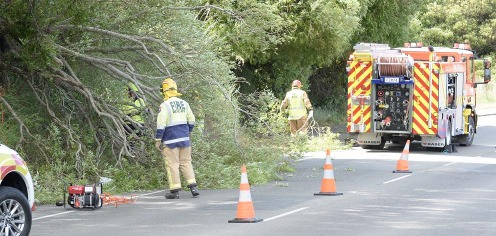 Fire crews clear part of a tree that fell on State Highway 88 late this afternoon. Photo: Gerard...
