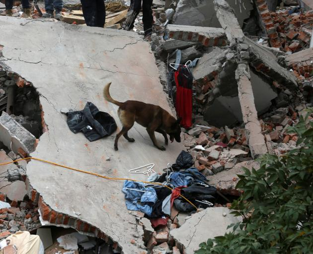 A rescue dog searches for people in Mexico City. Photo: Reuters