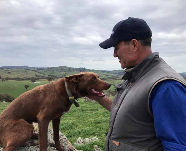 Australian sheep and wool producer Dave Young and his working dog Bill on the farm in New South...