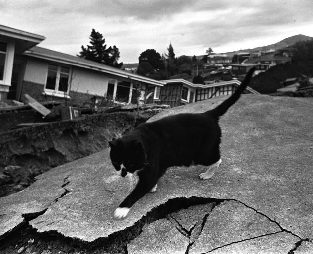 A cat navigates its way over the cracked ground. Photo: ODT files