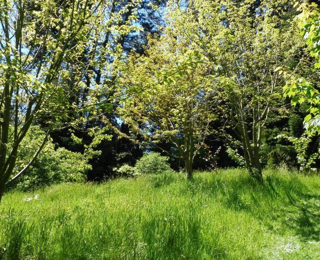 Arboretum spring track