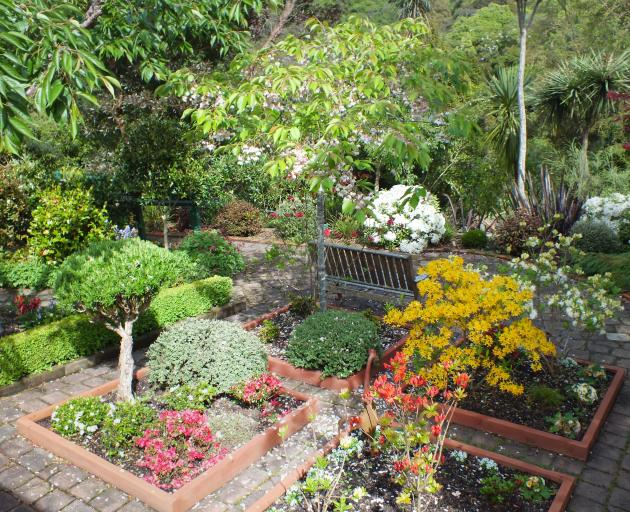 Azaleas have taken the place of vegetables in the four small beds.