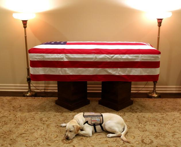 Sully, the service dog of George H.W. Bush in his final months, lays in front of his casket at a...