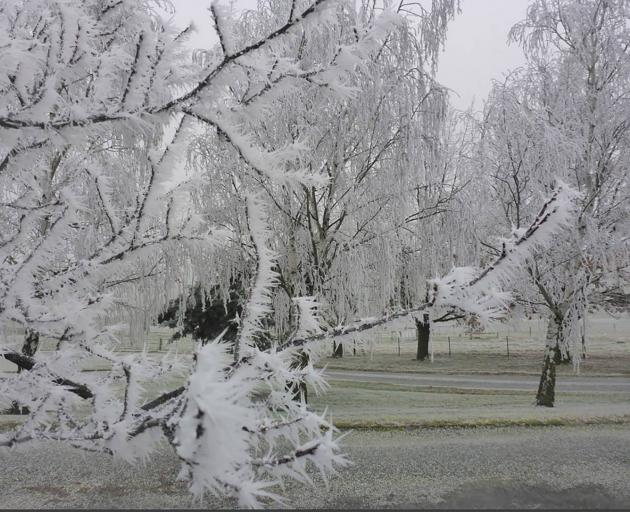 Frost in Central Otago this morning. Photo: Wills Dobson via NZME