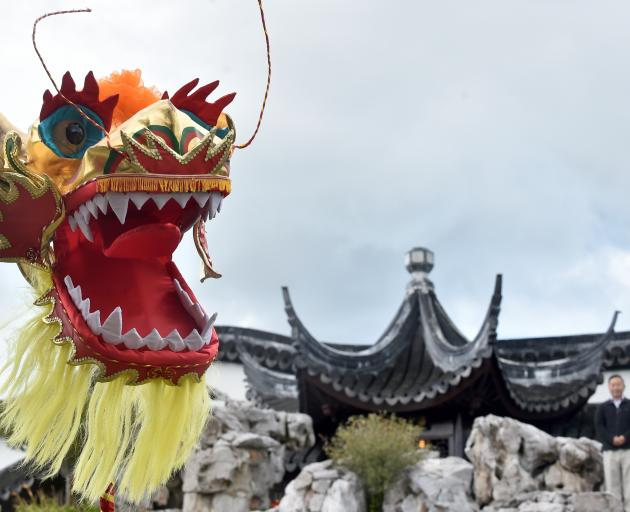 The dragon which will perform at Chinese New Year celebrations tonight, and Dunedin Chinese...