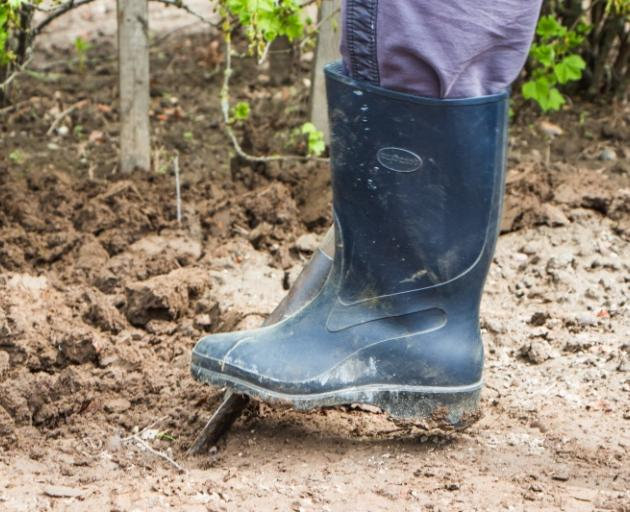 Gardening at this time of the year is limited, as the winter's worst weather usually comes in July and August. Photo: Getty Images