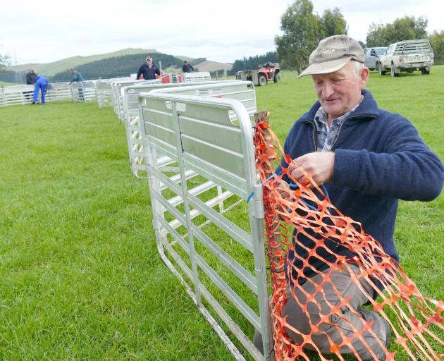 Clinton Lions member Steve Wilson, of Kuriwao, helps set up the tailing pen during the club's fundraising tailing drive in Slopedown earlier this month. Photo: Richard Davison