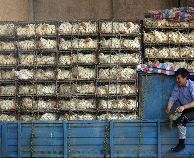 Caged chickens at a poultry  market in Nanjing, China, in 2007. At the time, Chinese state media...
