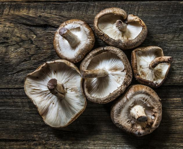 Mushrooms thrive in captivity | Otago Daily Times Online News