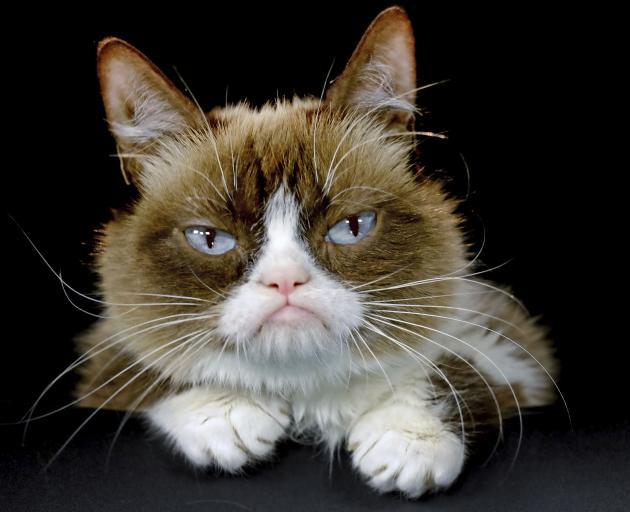 Grumpy Cat became an internet sensation. Photo: AP