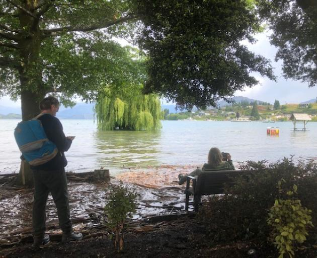 Access to the popular Wanaka tree attraction is difficult. Photo: Kerrie Waterworth