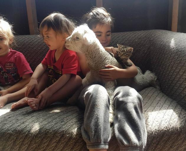 Lamb Lamb with the family and one of his kitten siblings. Photo: Marc Hyslop