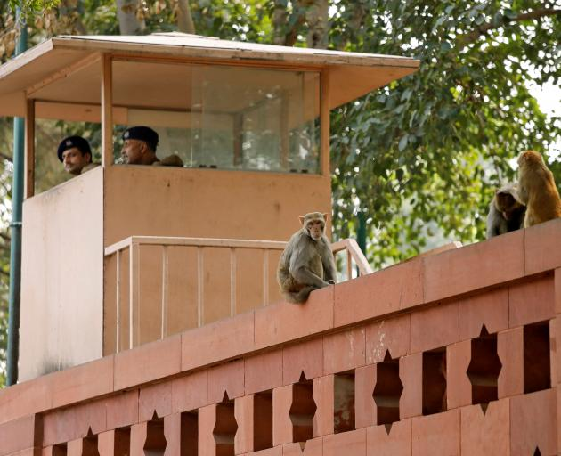 Monkeys on a wall next to a security personnel keeping guard at India's Parliament premises in New Delhi. Photo: Reuters