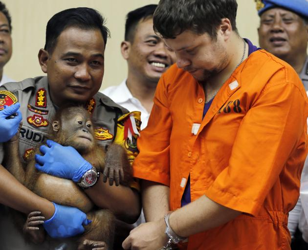 Police chief Ruddi Setiawan holds the two-year-old orangutan Russian Andrei Zhestkov (centre) is...