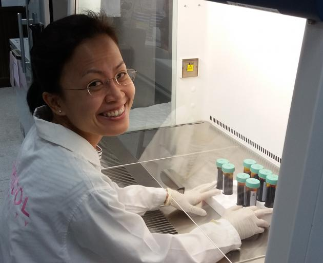 University of Otago PhD student Adeline Chua processing cord blood for malaria culture. Photo:...