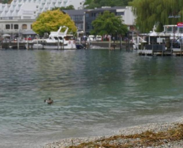 E.coli levels in Queenstown Bay have subsided. Photo: Joshua Walton