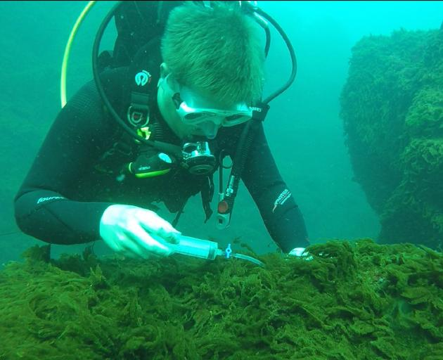 PhD student Ro Allen takes samples of phytoplankton growing in the acidic environment around a...