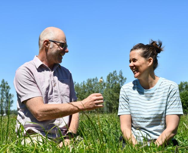 Dylan and Sheree Ditchfield in their multi-species permanent pasture, sown 12 months ago.