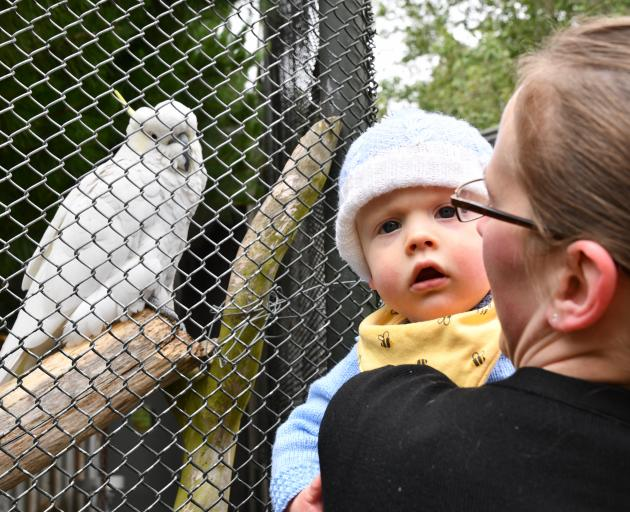 Zac the cockatoo was visited by 9-month-old Eric Larson and his mum Sam on Wednesday. PHOTO:...