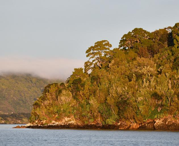 Forest on Stewart Island almost reaches down to the sea.