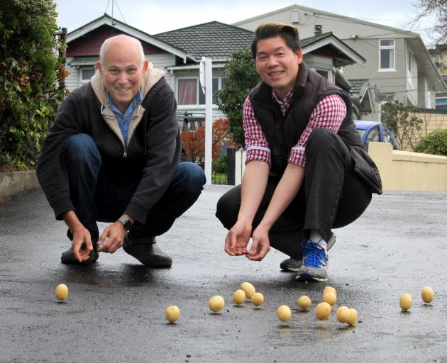 Waitaki Tourism Association chairman James Glucksman and board member Ole Wallis test-roll a few potatoes down Wansbeck St yesterday. Photo by Hamish MacLean.
