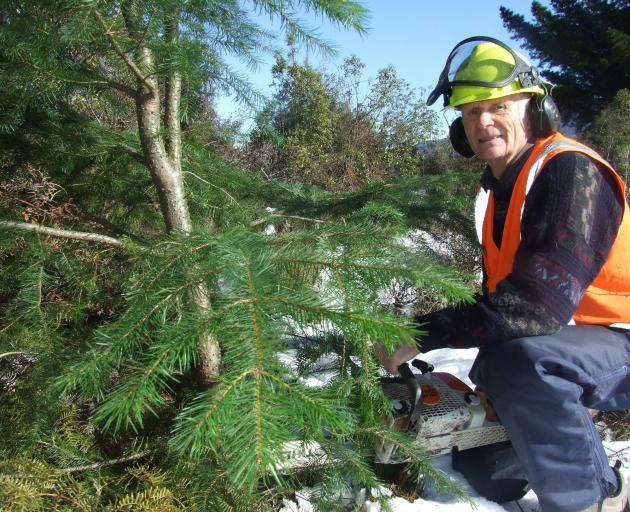 Mr Willsman wielding a chainsaw in 2011. Photo: ODT.