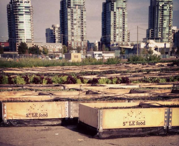 Sole Food Farms grows produce on disused urban land. Photo: Lisa Parker.