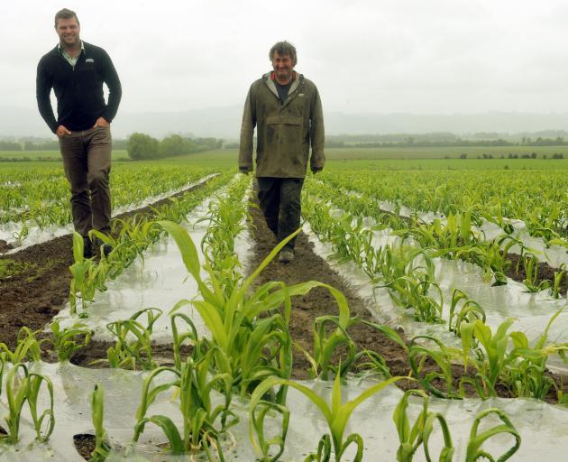 Farmlands technical field officer Kieran Fowler (left) and Taieri farmer Brian Michelle inspect a...